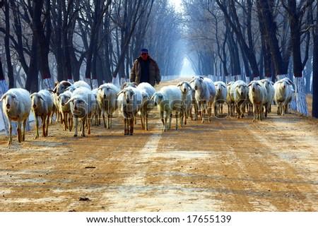 Winter, shepherd on country road - stock photo