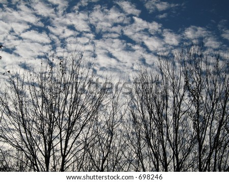 Winter sky with bare trees and clouds - stock photo