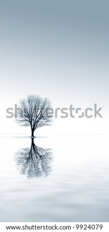 winter snow and a single tree with reflection