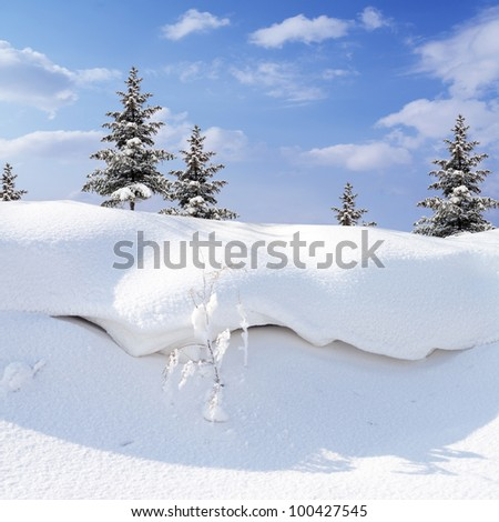 winter snow covered fir trees  on blue sky background - stock photo