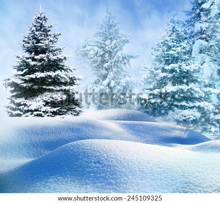 winter snow covered fir trees on mountainside  - stock photo