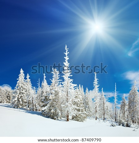 Winter snow covered fir trees on mountainside on blue sky with sun shine background - stock photo