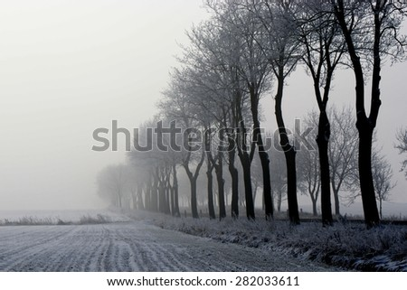 Winter - snow-covered trees growing near a road.  And around, the surrounding fog. - stock photo