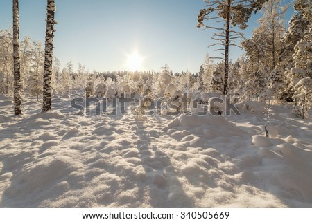 Winter snow-covered wood. A winter landscape - stock photo
