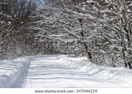 winter snow landscape trees