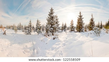 Winter snow landscape with pine trees. Panoramic shot. - stock photo