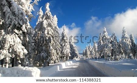winter snow nature - stock photo