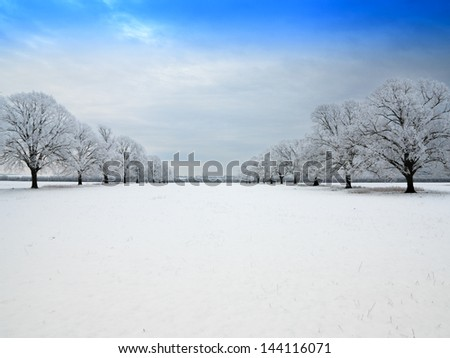 Winter snow scene at midday of frost covered trees - stock photo