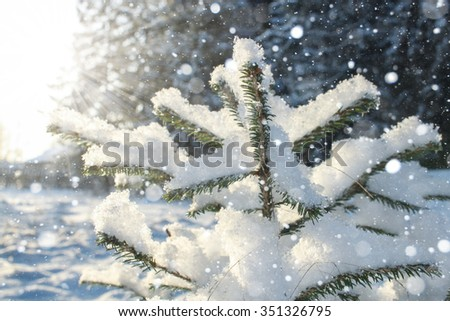 Winter. Snow, Snowfall. Outside the city, the village. Russia, the North, Siberia Tree in frost. - stock photo