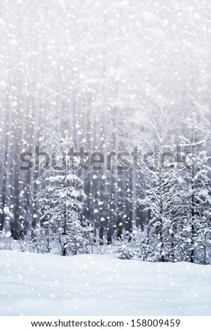 Winter. Snowfall. Photo. - stock photo
