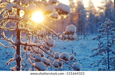 Winter snowy forest at sunset. Beautiful Christmas landscape.Shallow depth-of-field.