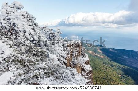 Winter snowy forest in Crimean mountains