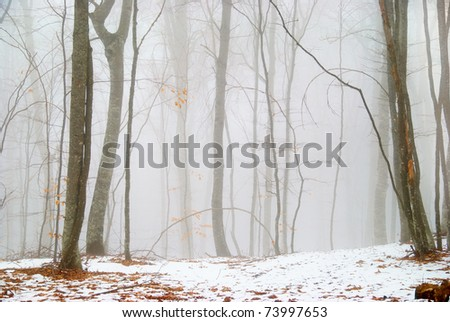 Winter snowy forest in the dense fog. - stock photo