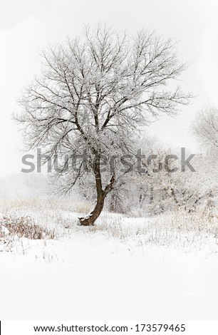 Winter snowy landscape with trees - stock photo