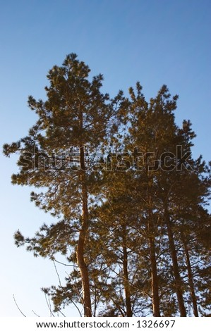 winter spruce - stock photo
