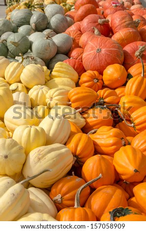 Winter squash on display at a farmers market - stock photo