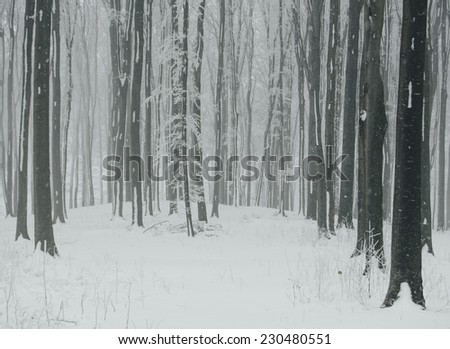 winter storm with snow falling in forest - stock photo