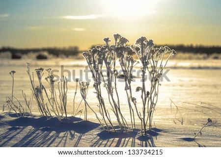 Winter Sunbath - stock photo