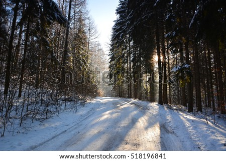 Winter sunny landscape with forest
