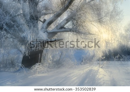 Winter sunrise landscape - frosty tree and  bright sunbeams breaking through branches at early morning in the forest  - stock photo