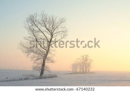 Winter sunrise over a field with frozen tree in the foreground. - stock photo