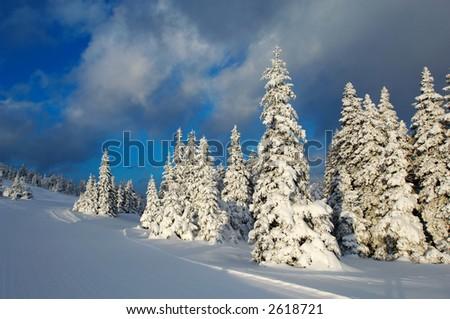 Winter sunset - stock photo