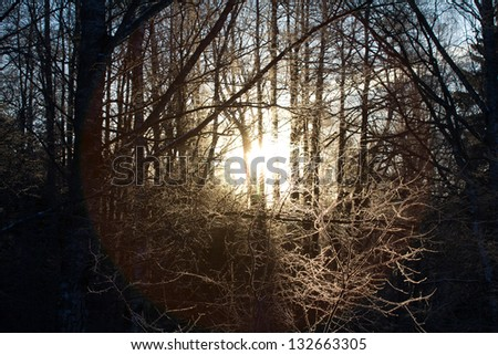 winter sunset among the wood in a hard frost - stock photo
