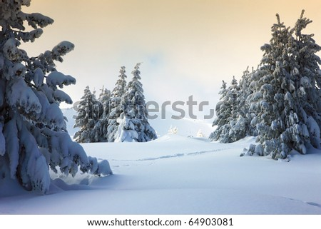 winter sunset in beauty forest - stock photo