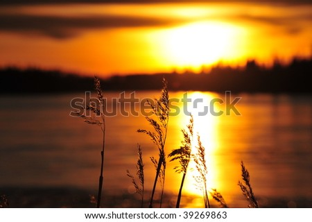 Winter sunset view in elk island national park, alberta, canada - stock photo