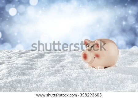 winter time and pig  - stock photo