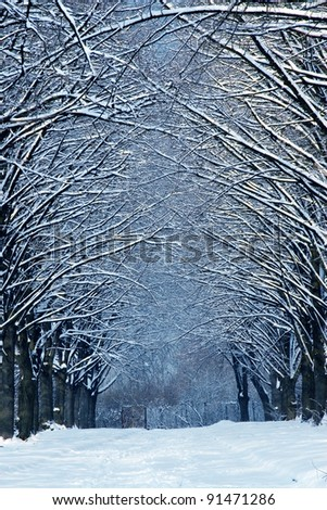 Winter time in forest with road - stock photo