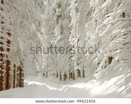 Winter trail leading through the coniferous forest on the mountain slope in the sunshine. - stock photo