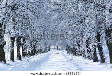 WInter tree alley - stock photo