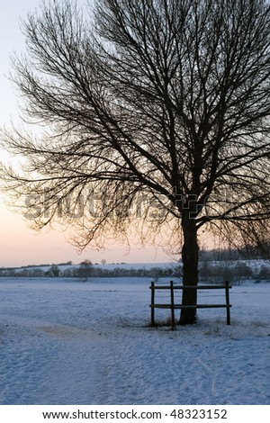 Winter tree at twilight - stock photo