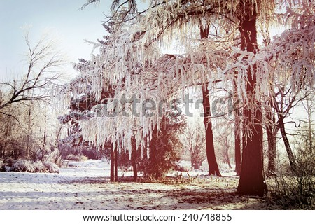Winter tree branches covered with snow sunny day - stock photo