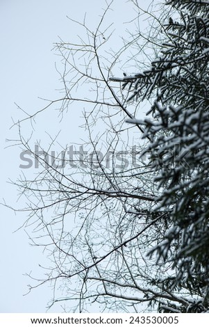 winter tree branches in abstract textured background