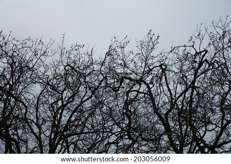 Winter tree branches on a cold day/ Suitable for background. - stock photo