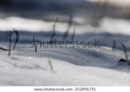 Winter tree in a field - stock photo