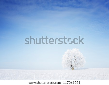 Winter tree in a field with blue sky - stock photo
