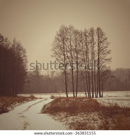 Winter, tree in snow field. Vintage photo. - stock photo