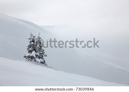 Winter tree in the mountains - stock photo