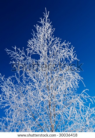 winter tree on a sky