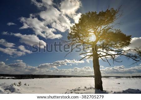 winter tree on the snow field under sun sky - stock photo