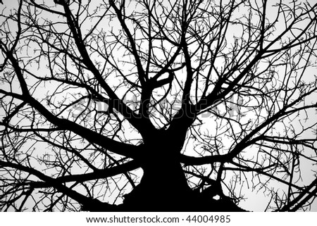 Winter tree silhouetted against a gray dark sky (black and white photo)