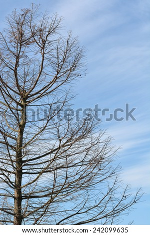 Winter tree without leaves against blue sky with interesting white clouds. - stock photo