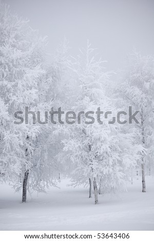 winter trees - stock photo