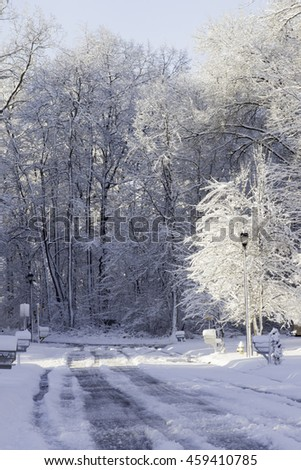 Winter trees and road covered by a load of snow - stock photo