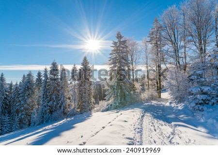 Winter trees and road in Beskid Sadecki Mountains with sun on blue sky, Poland - stock photo
