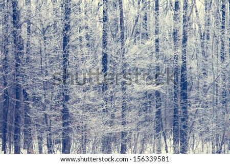 Winter trees background. Winter landscape with trees - stock photo