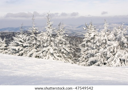 Winter trees covered snow in mountain. - stock photo